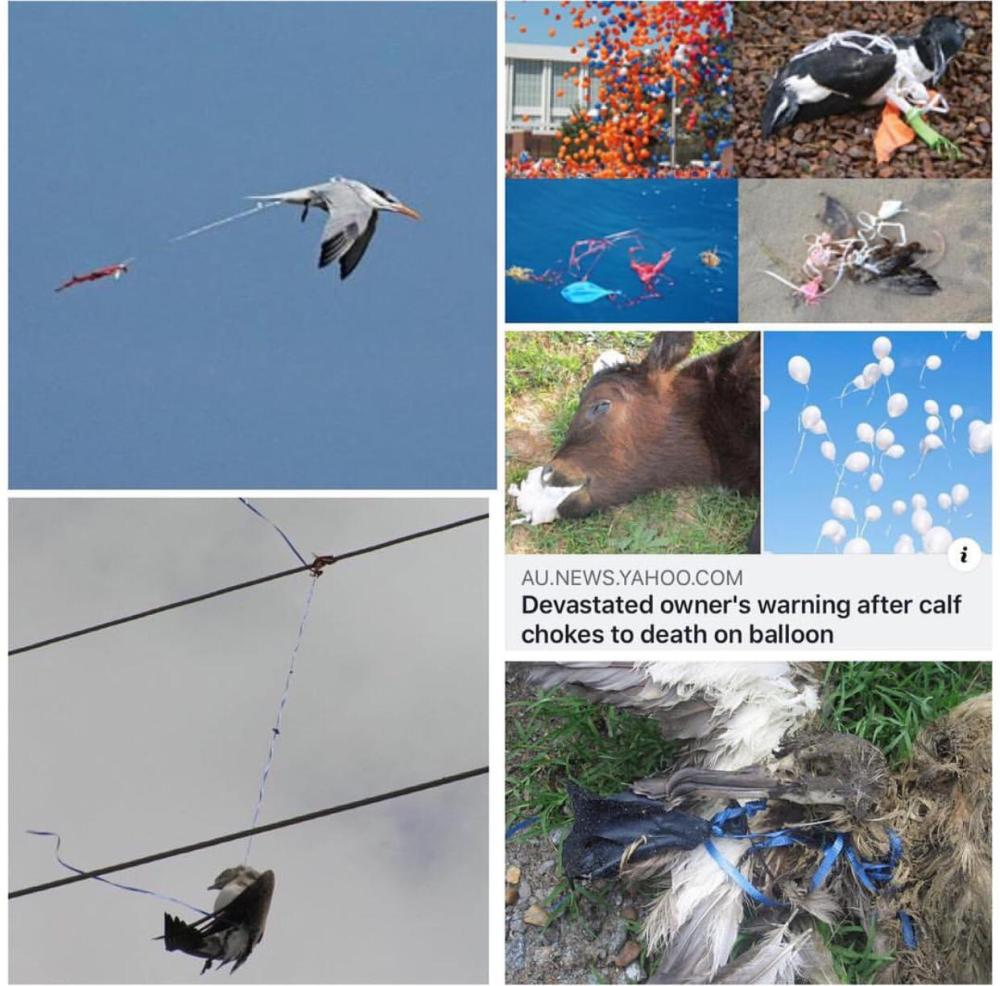 Impact of balloons on wildlife and environment